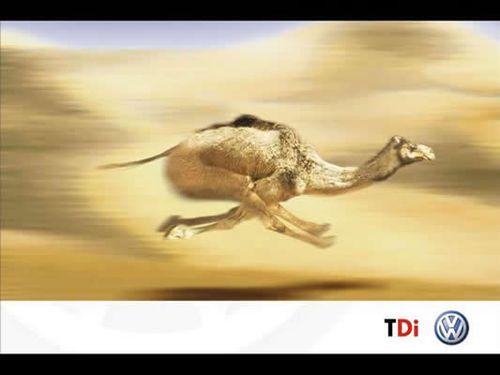 الجمال نواع Camel